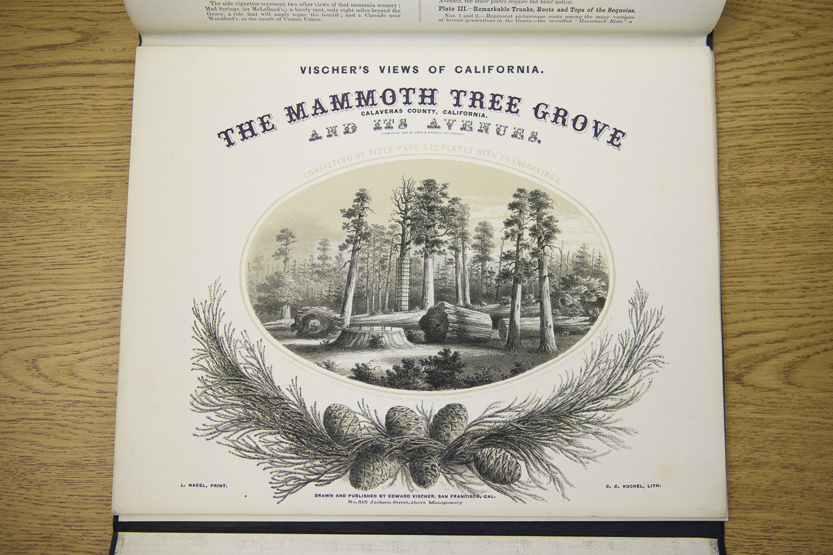A book of engravings known as Vischer's Views of California depicts the Mammoth Tree Grove. Image credit: L.A. Cicero