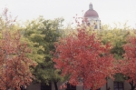 Fall foliage with Hoover Tower in background