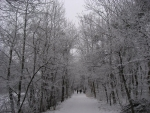 Winter in the Viennese woods
