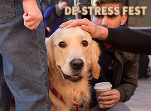 Photo of Oliver the dog at the Winter 2013 De-Stress Fest.