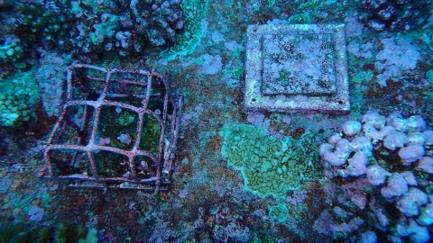 Image of tile in its study location at the Palmyra Atoll.