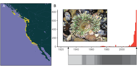 A figure with a map of the extent or the anemone Anthopleura elegantissima, and the number of observations over time in GBIF.