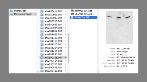 Mac finder window showing files with unrecognized file types along with exported TIF version, screen shot by Amy Hodge