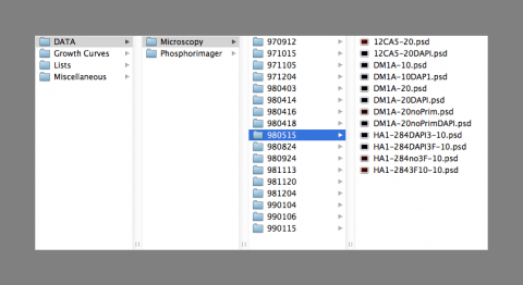 Mac finder window showing files with bad file names, screen shot by Amy Hodge