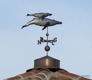 Hopkins Marine Station Weathervane
