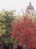 Libraries' Thanksgiving Hours. Hoover Tower and trees with fall colors.