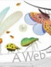 Cover image of A web