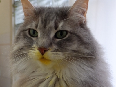 The Cat with the Yellow Mouth