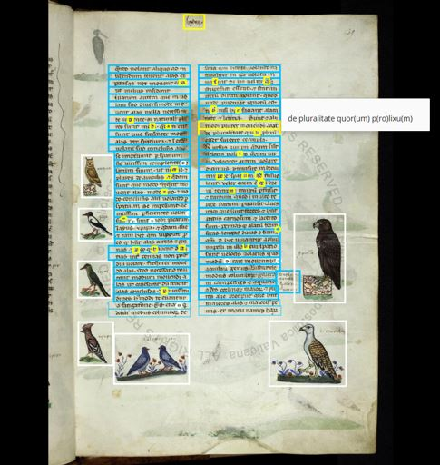 Friedrich II, De arte venandi cum avibus (Pal.lat.1071, 13th cent.), 39r: Example of transcription with annotated illuminations.